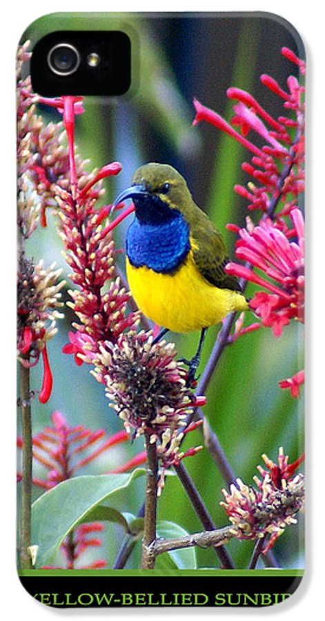 Animals IPhone 5 Case featuring the photograph Sunbird by Holly Kempe