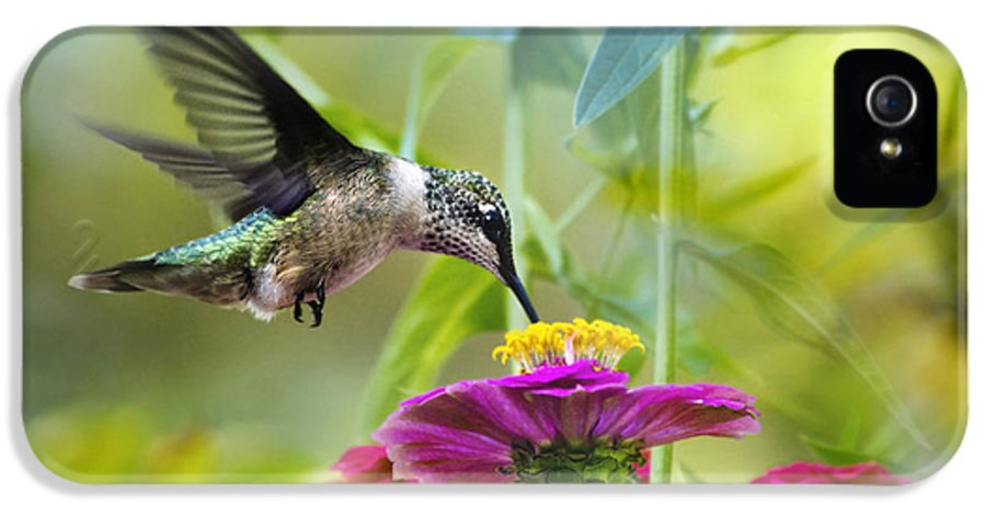 Bird IPhone 5 / 5s Case featuring the photograph Sweet Success by Christina Rollo