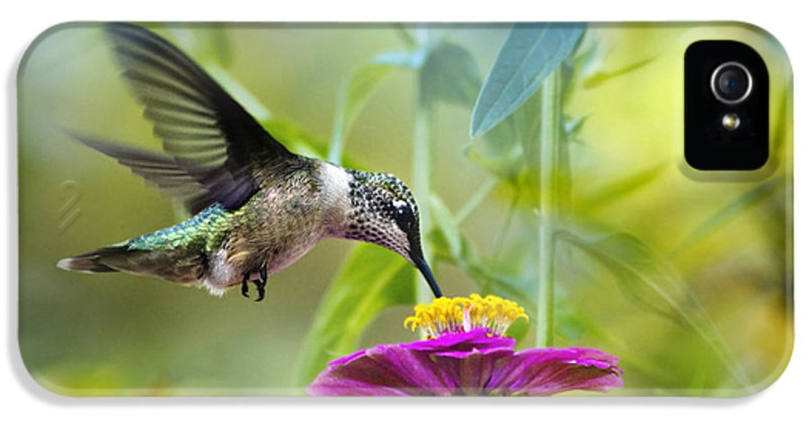 Bird IPhone 5 Case featuring the photograph Sweet Success by Christina Rollo