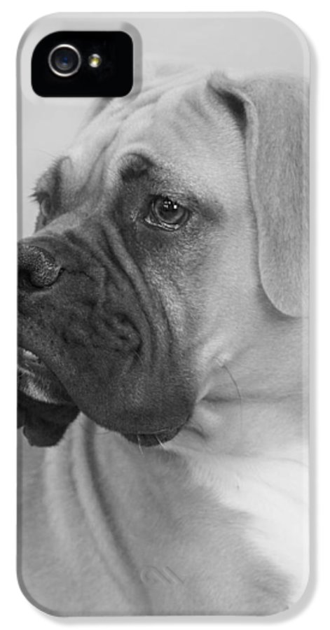 Boxer Dog IPhone 5 Case featuring the photograph The Boxer Dog - The Gentleman Amongst Dogs by Christine Till