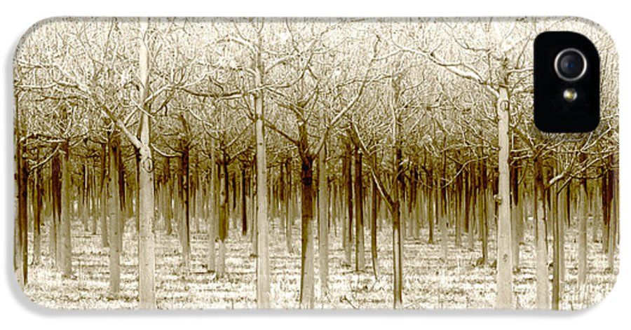 Landscape IPhone 5 Case featuring the photograph The Forest For The Trees by Holly Kempe