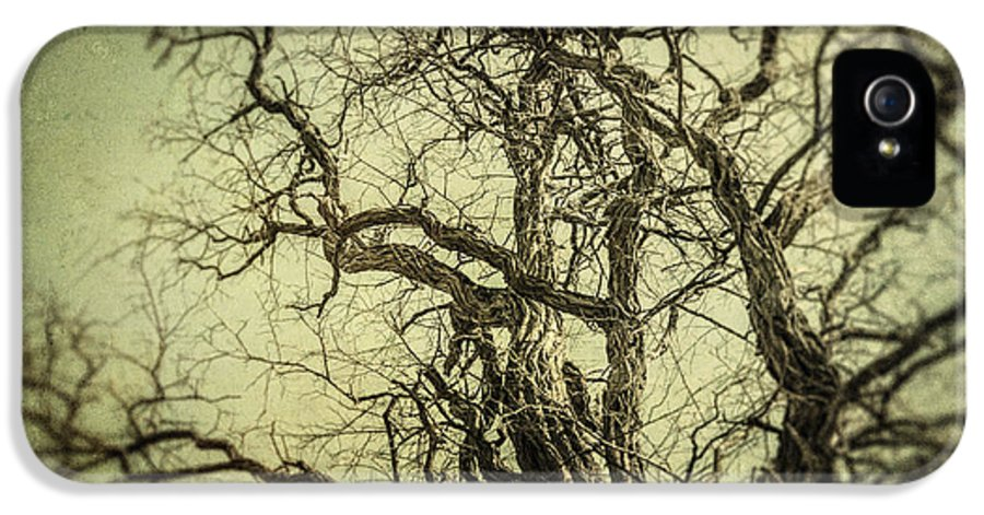 Tree IPhone 5 Case featuring the photograph The Haunted Tree by Lisa Russo