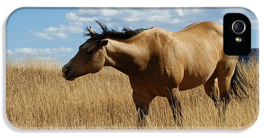 Horse IPhone 5 Case featuring the photograph The Horse by Ernie Echols