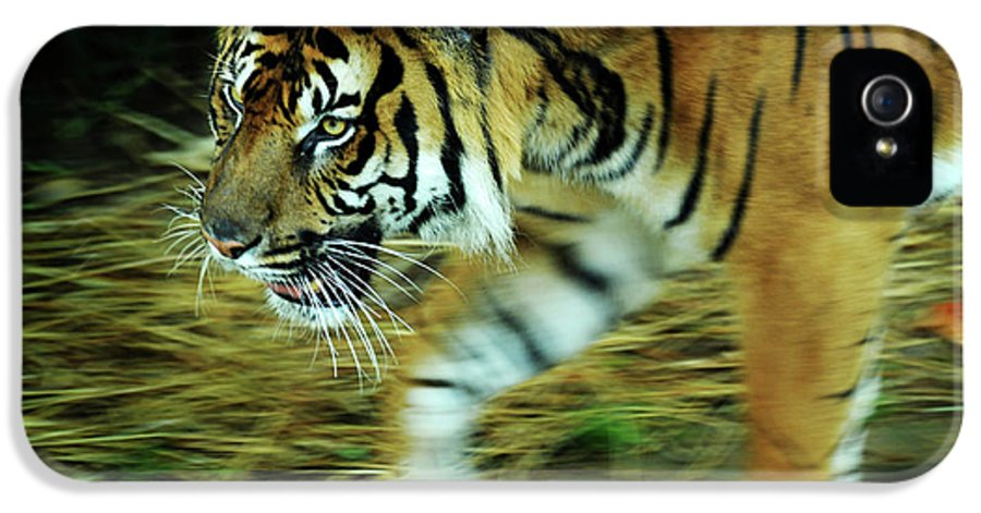 Bengal IPhone 5 Case featuring the photograph Tiger Burning Bright by Rebecca Sherman