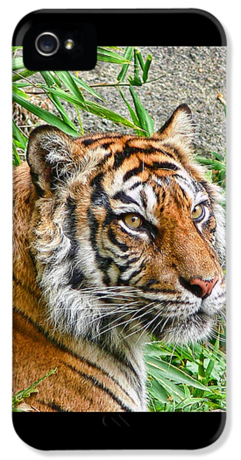 Tiger IPhone 5 / 5s Case featuring the photograph Tiger Portrait by Jennie Marie Schell