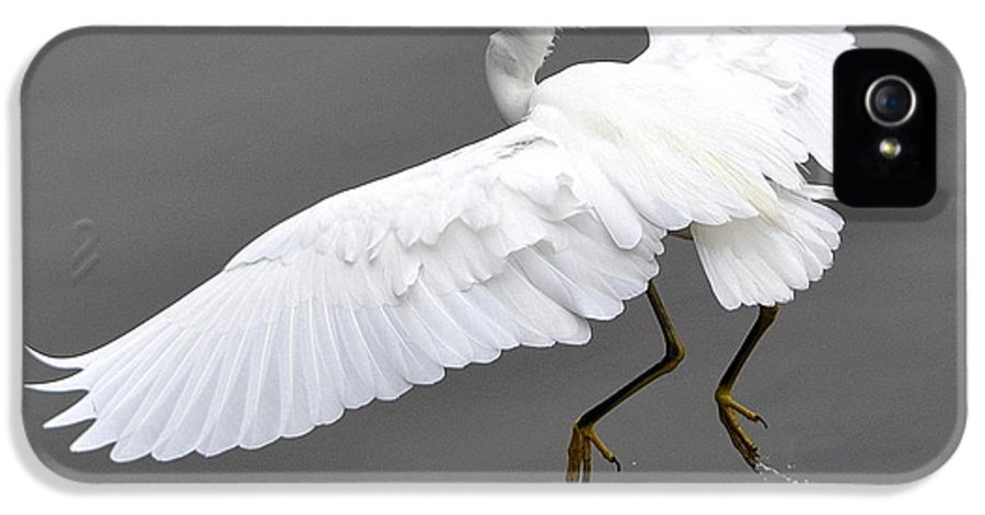Snowy White Egret IPhone 5 Case featuring the photograph Tiptoe by Fraida Gutovich