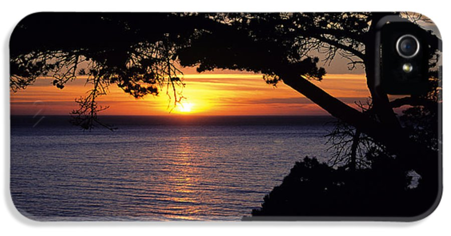 Ali O Neal IPhone 5 Case featuring the photograph Tree Framing Seascape Sunset by Ali ONeal - Printscapes