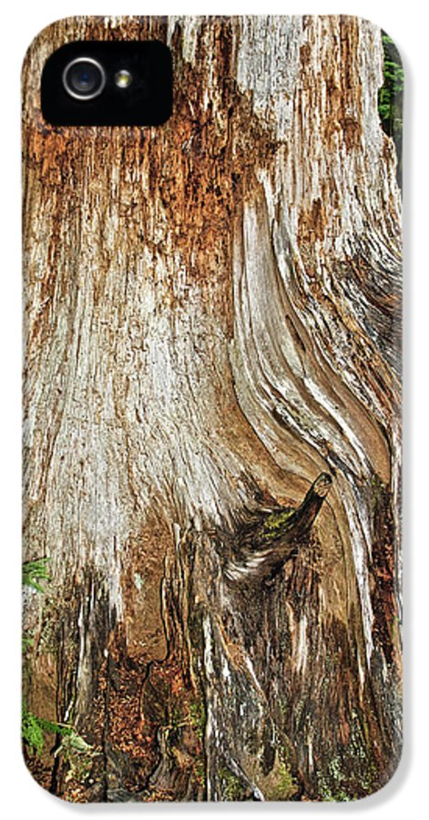 Red Cedar Tree IPhone 5 Case featuring the photograph Trees On The Trails - Olympic National Park Wa by Christine Till