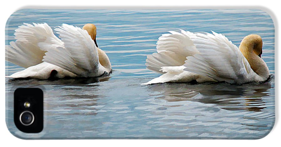 Swans IPhone 5 Case featuring the photograph True Love by Lois Bryan