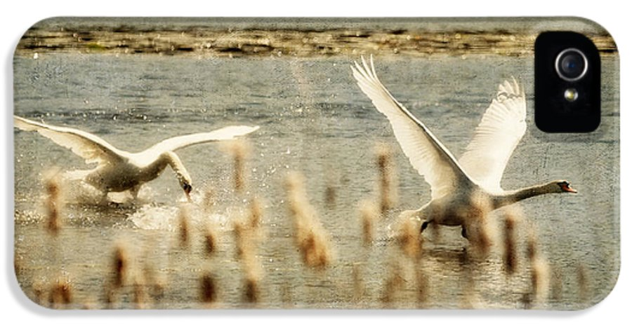 Swans IPhone 5 Case featuring the photograph Turf Wars by Lois Bryan