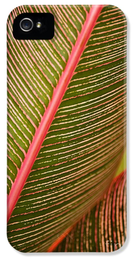 Abstract IPhone 5 Case featuring the photograph Variegated Ti-leaf 1 by Ron Dahlquist - Printscapes