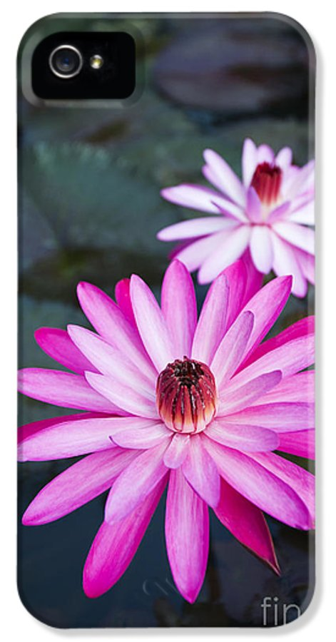 Beautiful IPhone 5 Case featuring the photograph Vibrant Waterlilies by Dana Edmunds - Printscapes