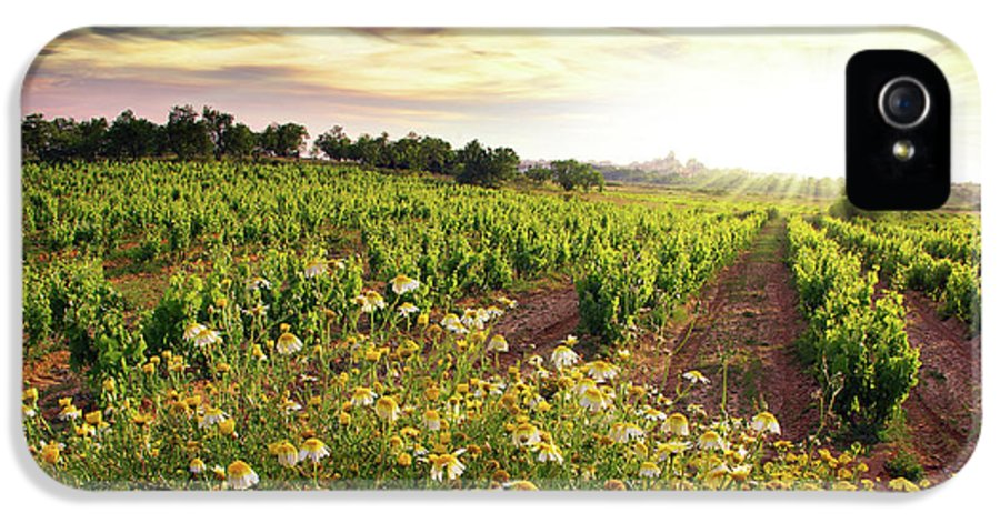 Agriculture IPhone 5 Case featuring the photograph Vineyard by Carlos Caetano