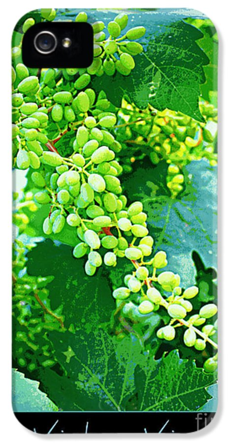 Vineyard IPhone 5 Case featuring the photograph Vintage Vines by Carol Groenen