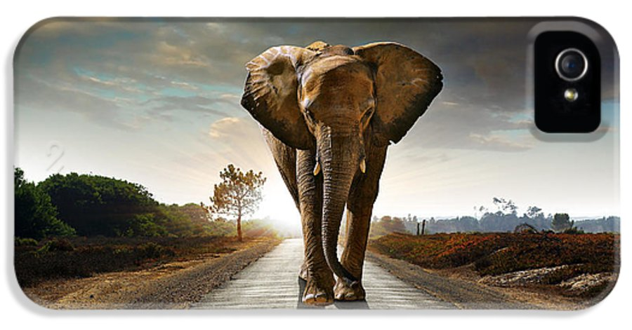 African IPhone 5 Case featuring the photograph Walking Elephant by Carlos Caetano