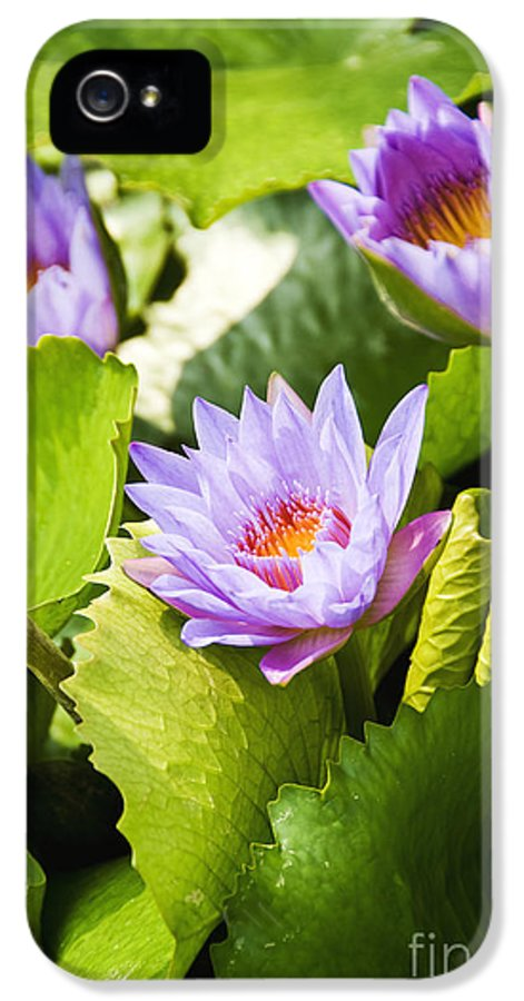 Afternoon IPhone 5 Case featuring the photograph Water Lilies by Ray Laskowitz - Printscapes