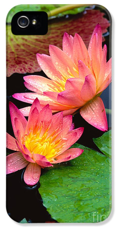 Bill Brennan IPhone 5 Case featuring the photograph Water Lily by Bill Brennan - Printscapes