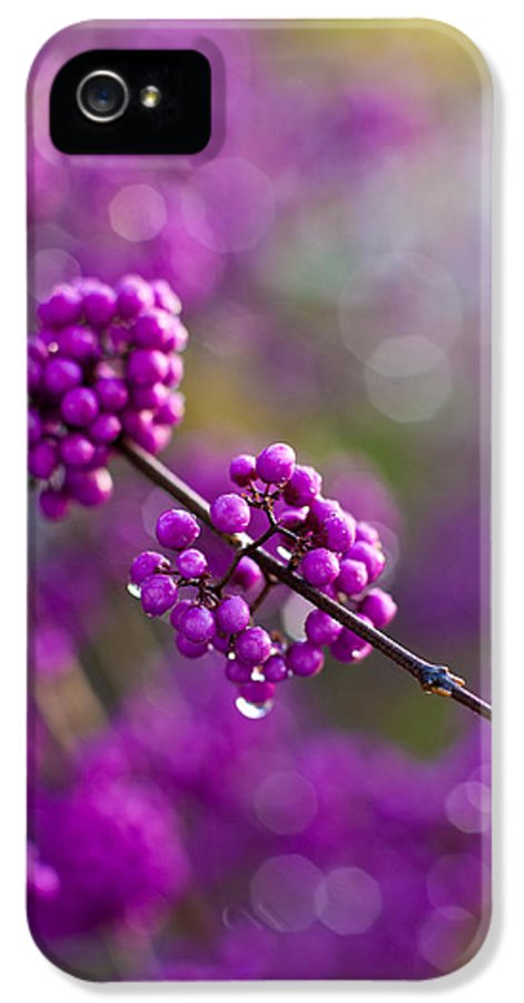 Beauty Berry IPhone 5 Case featuring the photograph Wet Purple 2 by Mike Reid
