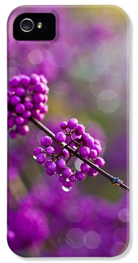Beauty Berry IPhone 5 / 5s Case featuring the photograph Wet Purple 2 by Mike Reid
