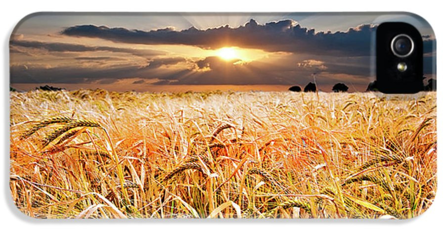 Wheat IPhone 5 Case featuring the photograph Wheat At Sunset by Meirion Matthias