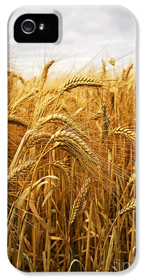 Wheat IPhone 5 Case featuring the photograph Wheat by Elena Elisseeva