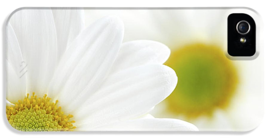 Daisy IPhone 5 / 5s Case featuring the photograph White Daisies by Elena Elisseeva