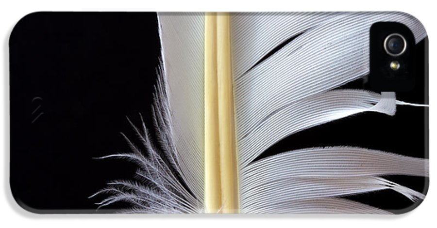 Feather IPhone 5 Case featuring the photograph White Feather by Bob Orsillo