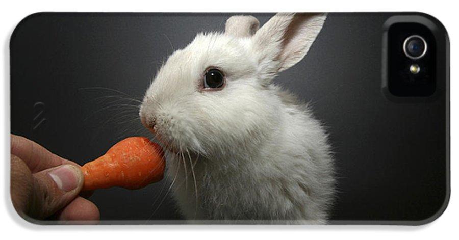 White IPhone 5 Case featuring the photograph White Rabbit by Yedidya yos mizrachi