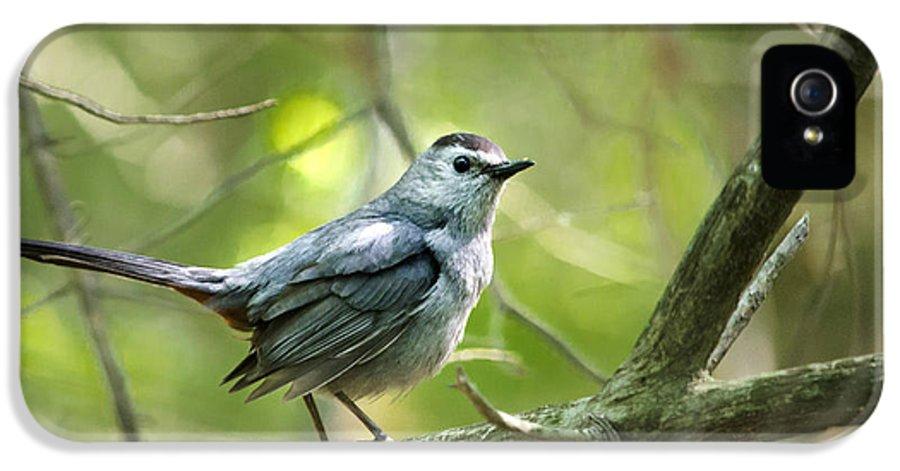 Bird IPhone 5 Case featuring the photograph Wild Birds - Gray Catbird by Christina Rollo
