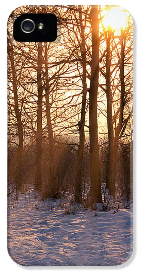 Sun IPhone 5 Case featuring the photograph Winter Break by Wim Lanclus