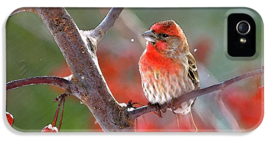 House Finch; House Finches; Carpodacus Mexicanus; Finch; Finches; Songbird; Songbirds; Bird; Birds; Avian; Ornithology; Animal; Animal; Wildlife; Nature;art IPhone 5 Case featuring the photograph Winter Red by Betty LaRue