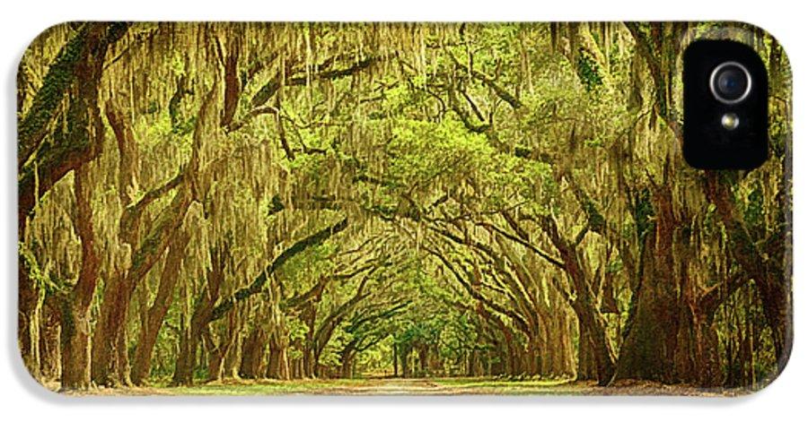 Wormsloe Plantation Oaks IPhone 5 Case featuring the photograph Wormsloe Plantation Oaks by Priscilla Burgers