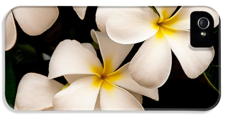 Yellow And White Plumeria Flower Frangipani IPhone 5 Case featuring the photograph Yellow And White Plumeria by Brian Harig