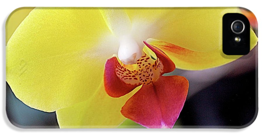 Yellow IPhone 5 / 5s Case featuring the photograph Yellow Phalaenopsis Orchids by Rona Black