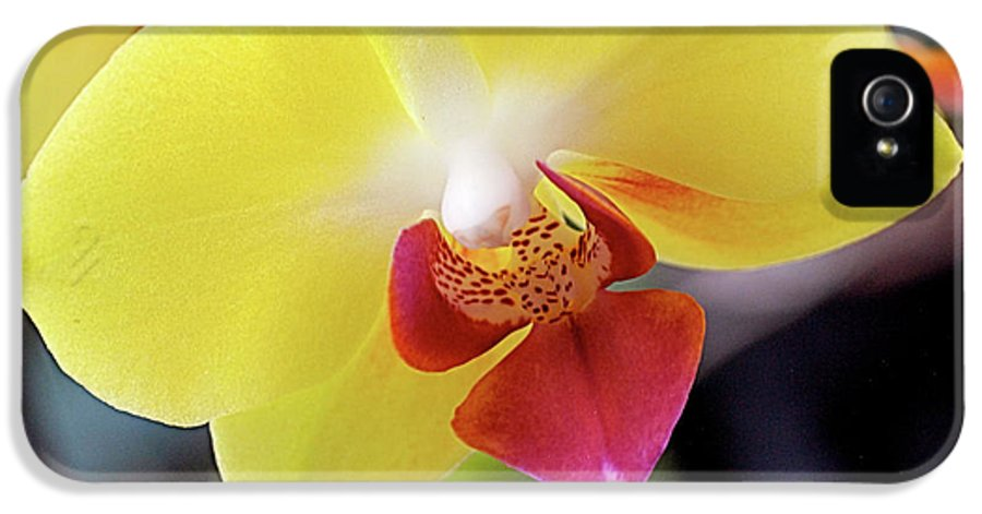 Yellow IPhone 5 Case featuring the photograph Yellow Phalaenopsis Orchids by Rona Black