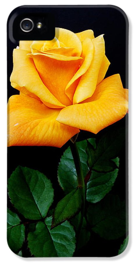Flower IPhone 5 Case featuring the photograph Yellow Rose by Michael Peychich