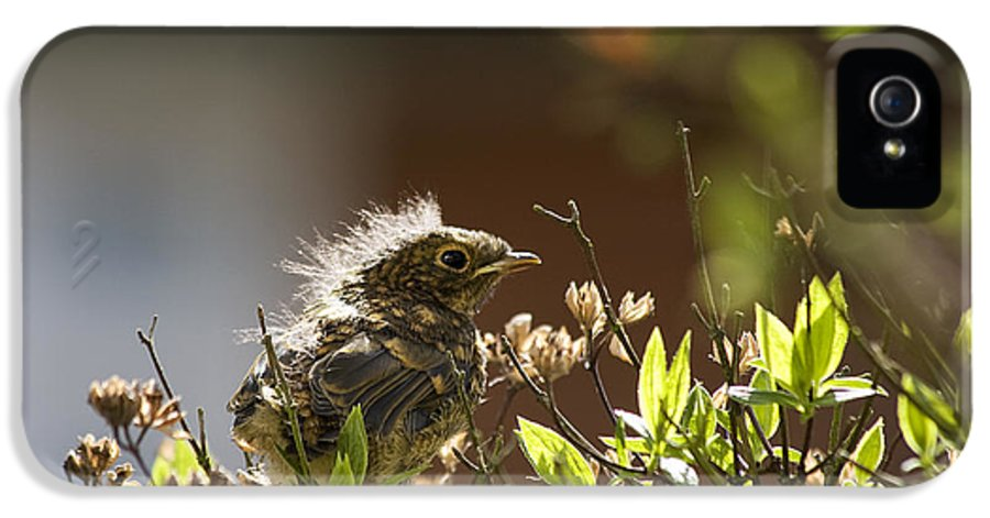 Scene IPhone 5 Case featuring the photograph Young Robin by Jane Rix