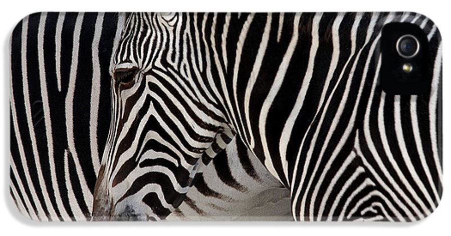 Abstract IPhone 5 Case featuring the photograph Zebra Head by Carlos Caetano