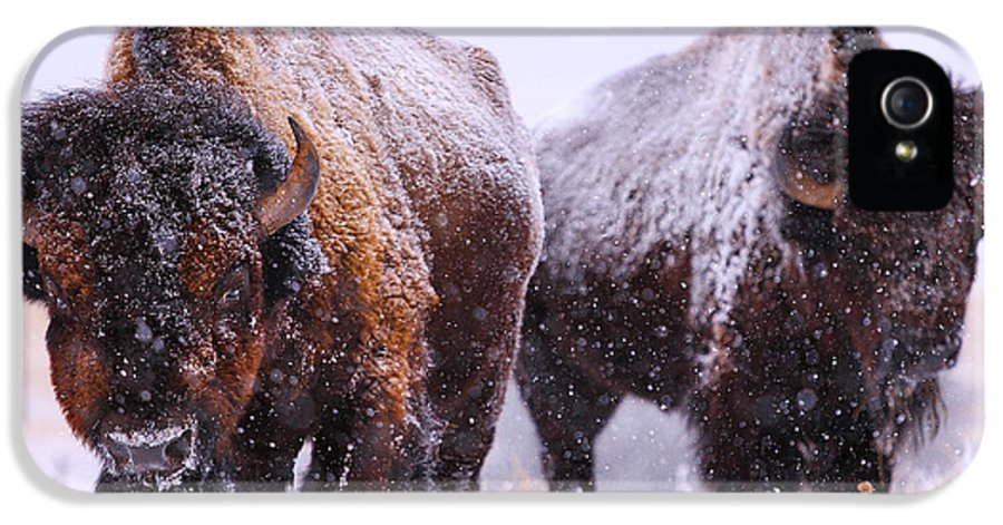 Buffalo IPhone 5 Case featuring the photograph Dimensions by Kadek Susanto