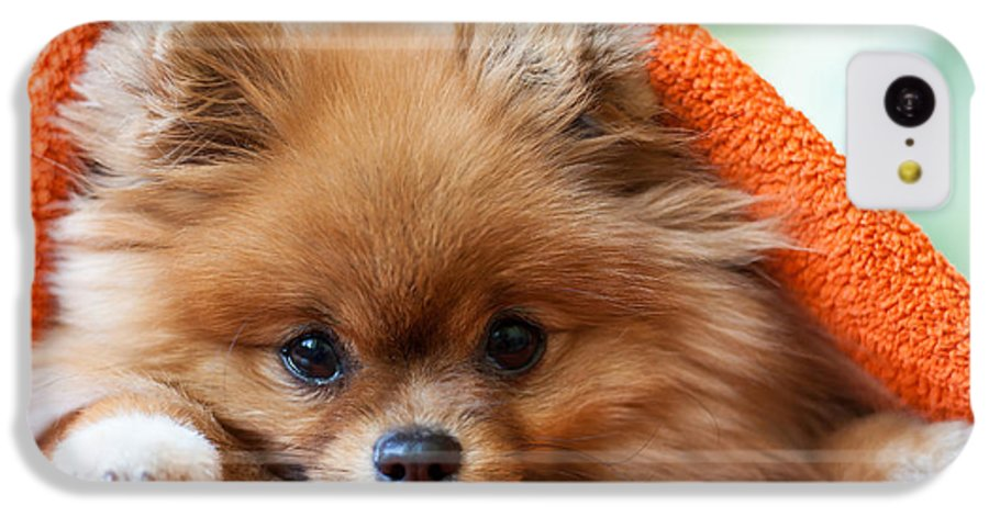 Gift IPhone 5c Case featuring the photograph Cute And Funny Puppy Pomeranian Smiling by Barinovalena