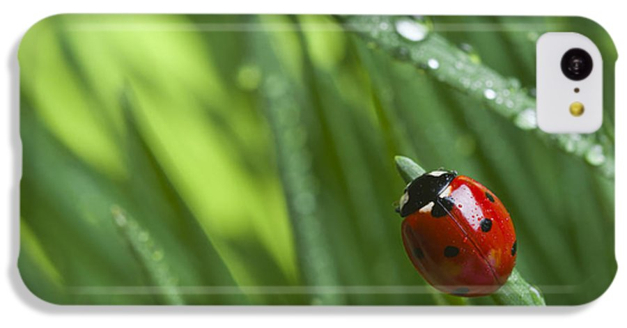 Ladybug On Leaf IPhone 5c Case featuring the photograph Ladybird On Grass by Didecs