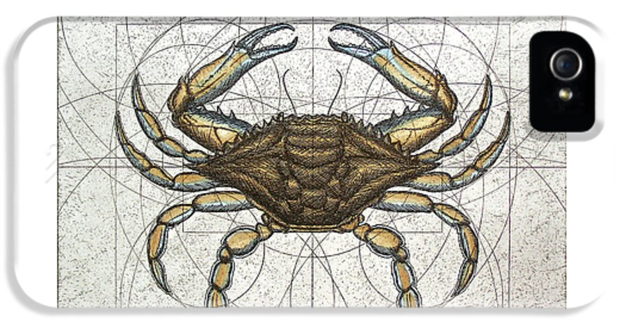 Maryland IPhone 5s Case featuring the painting Blue Crab by Charles Harden