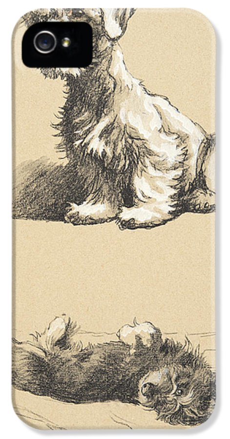 Aldin IPhone 5s Case featuring the drawing Sealyham And Rough Dachund Puppy, 1930 by Cecil Charles Windsor Aldin