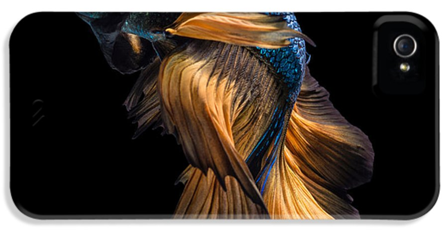 Fancy IPhone 5s Case featuring the photograph Colourful Betta Fish,siamese Fighting by Nuamfolio