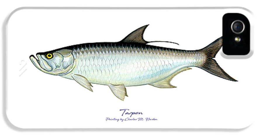 Charles IPhone 5s Case featuring the painting Tarpon by Charles Harden
