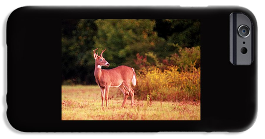 Deer IPhone 6 Case featuring the photograph 070406-58 by Mike Davis