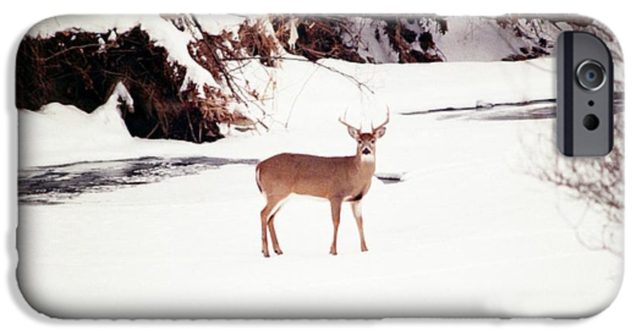 Whitetail Deer IPhone 6 Case featuring the photograph 080706-89 by Mike Davis