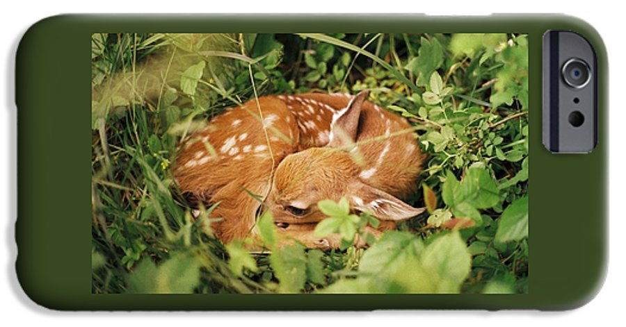 Deer IPhone 6 Case featuring the photograph 080806-17 by Mike Davis