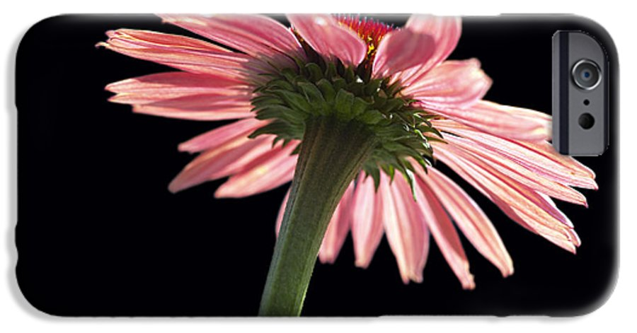 Echinacea IPhone 6 Case featuring the photograph Coneflower by Tony Cordoza