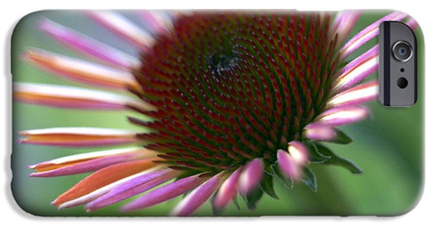 Genus Echinacea IPhone 6 Case featuring the photograph Coneflower by Tony Cordoza